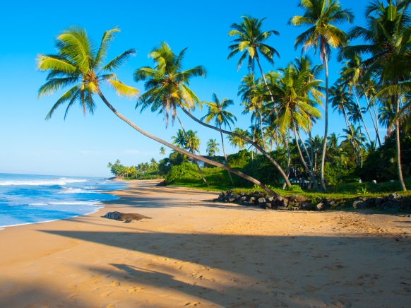 Untouched  sunny  tropical beach in  seashore of Sri Lanka