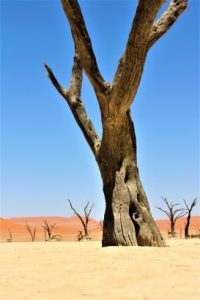Haniel Travel | Namibia Desert Trees